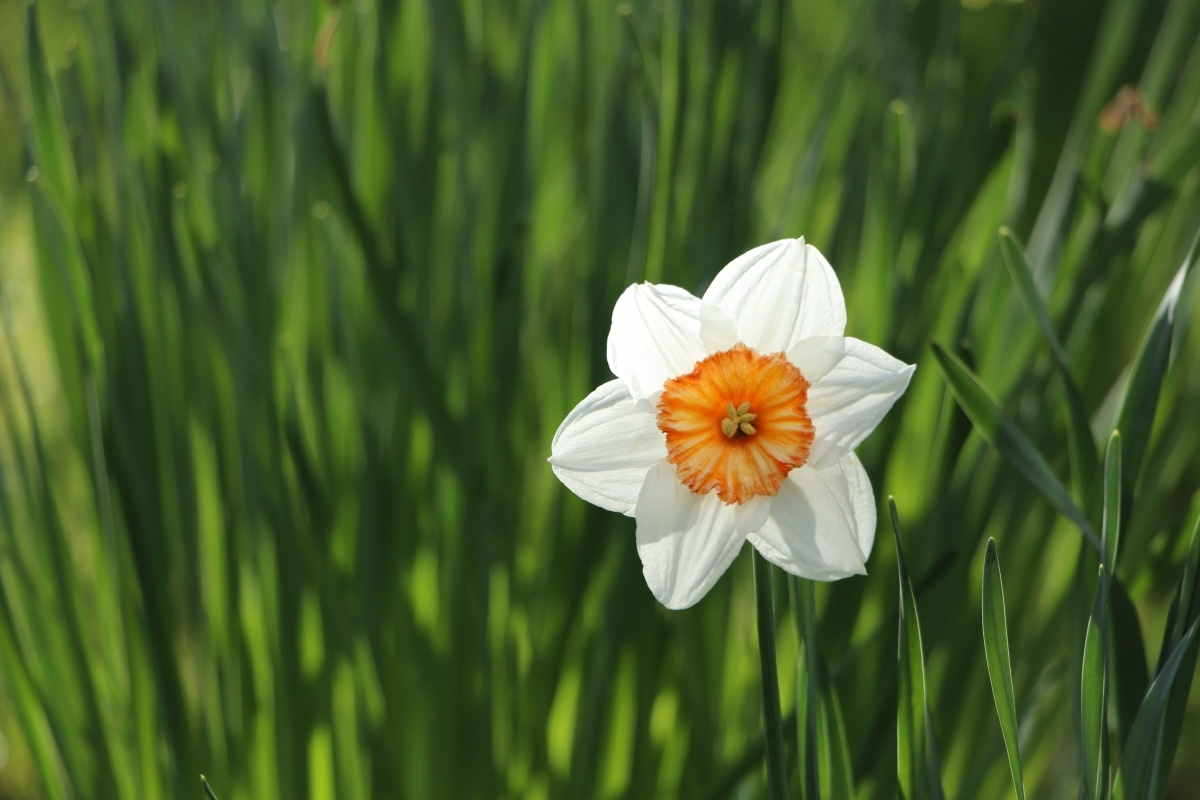 Optimized-katherine-mccormack-81961- spring.jpg