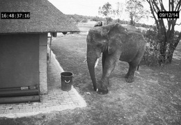 Optimized-elephant cleaning-1.jpg