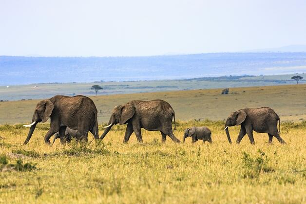 elephants reuse how to eat incremental milestone