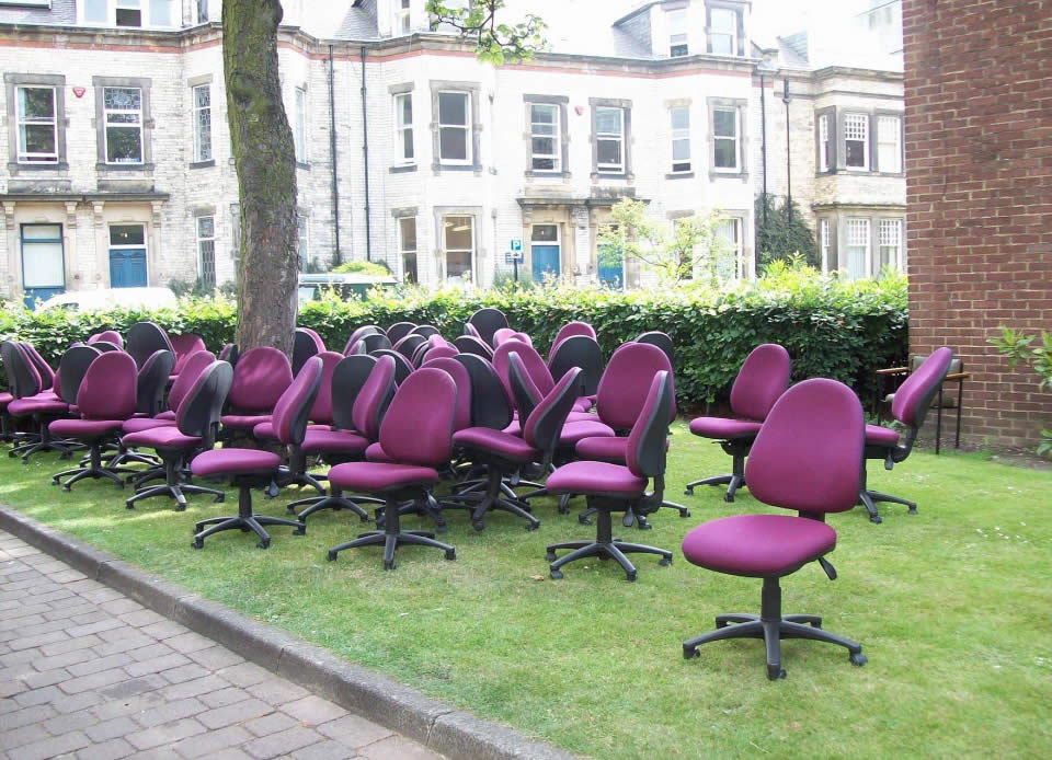 unwanted chairs grazing on grass