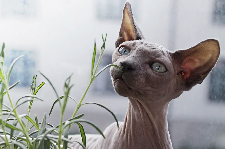 sphynx cat in front of plant photo – Free Animal Image on Unsplash