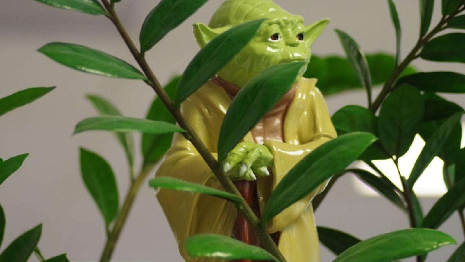 yoda green mentor