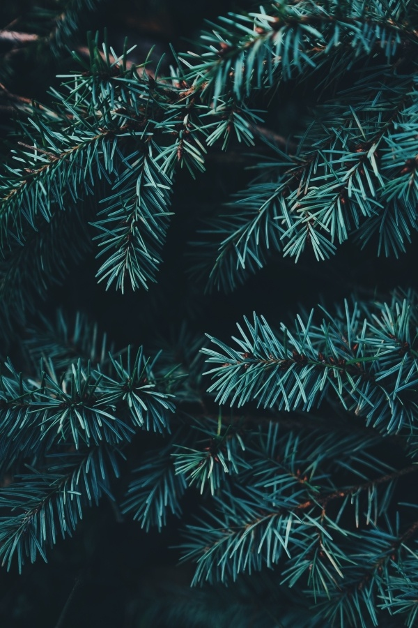 Top Tips For Delivering a Christmas Communications Campaign