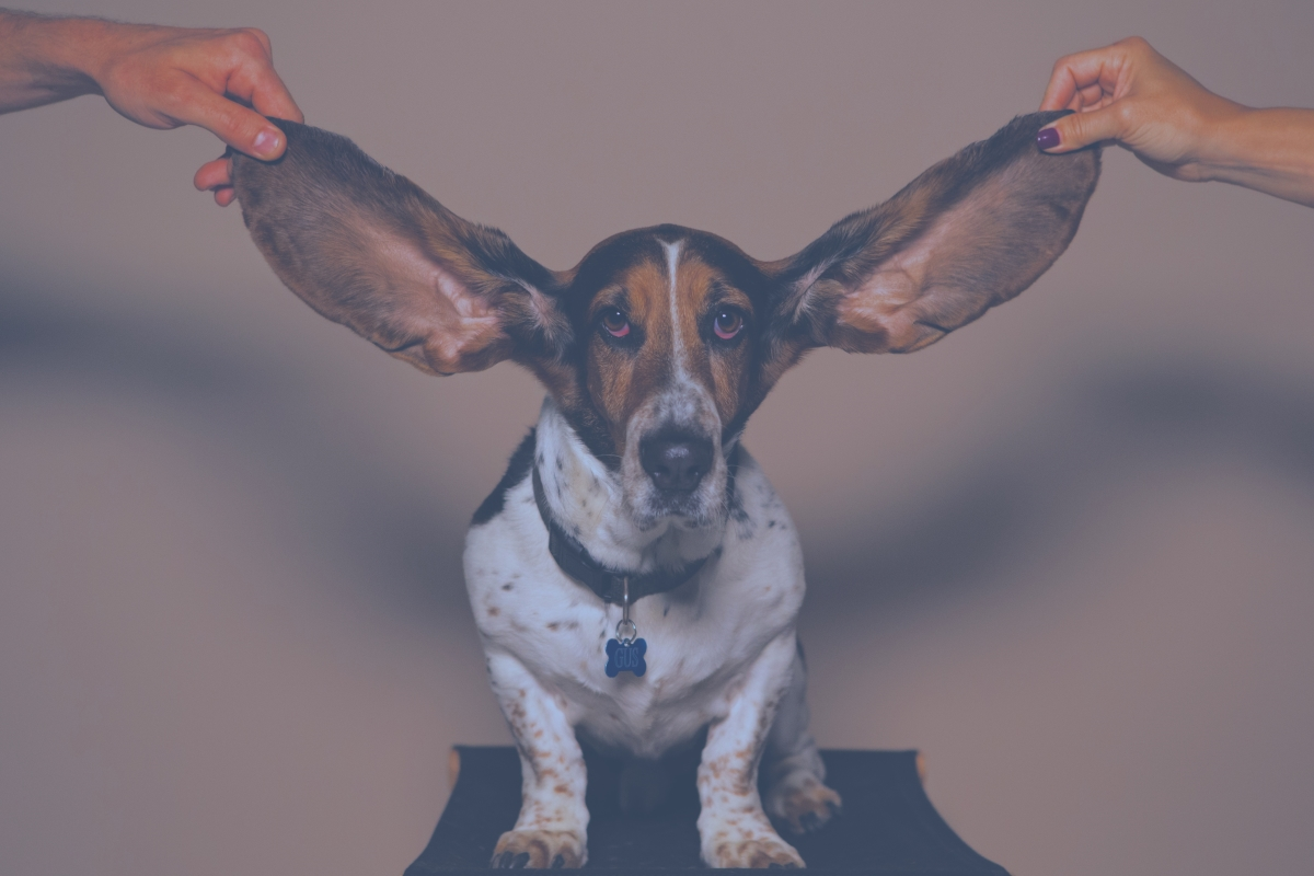Getting in the Ear of your CEO (or organisational lead)